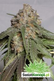 blueberry-headband-3.jpg