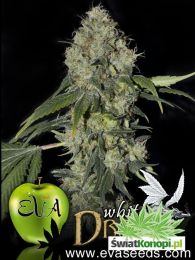 white_dragon_eva_seeds.jpg